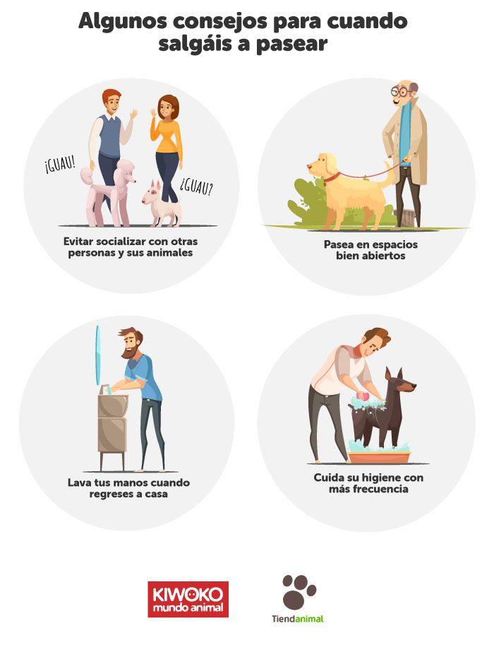 Doubts And Advice on Pets in Times of Quarantine For The Coronavirus