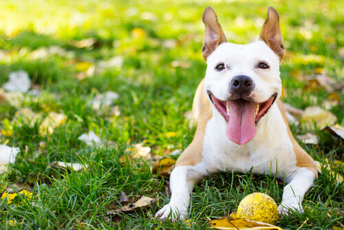 5 Tips to Have a Healthy and Happy Dog