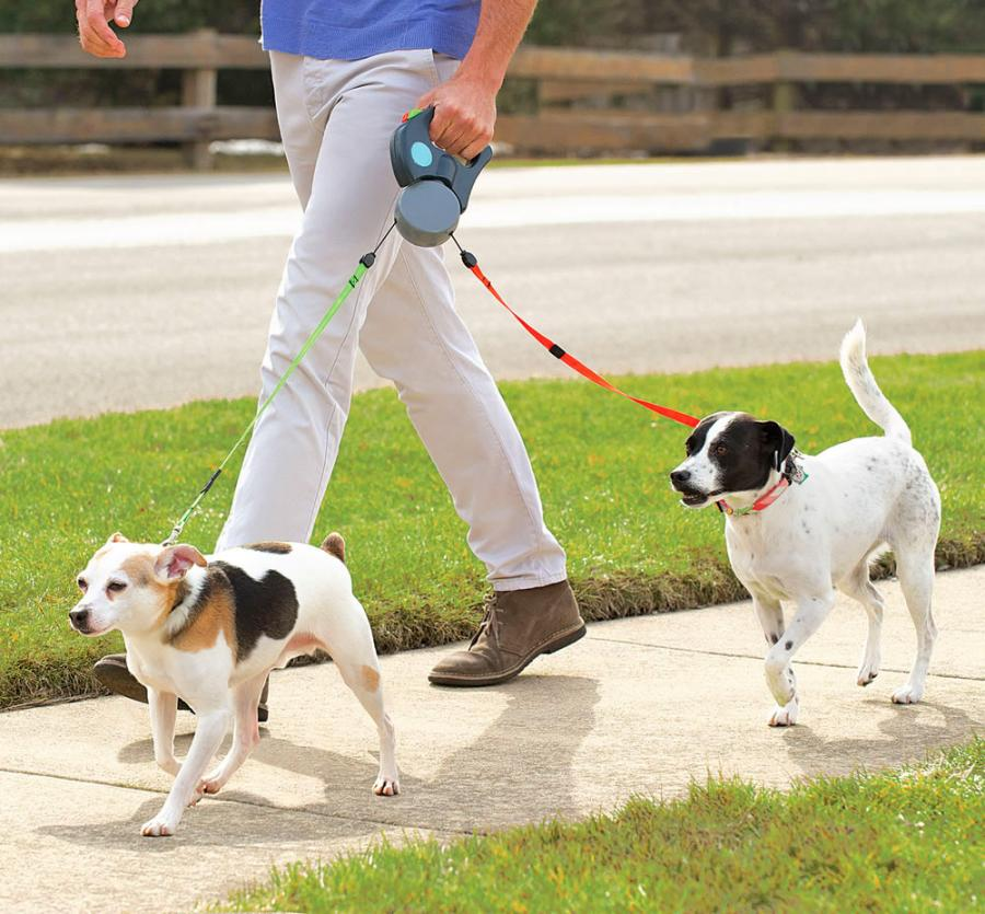 What to Know When You Buy a Top-Rated Dog Leash For Your Puppy