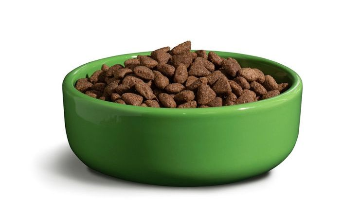 How to Know What Dog Food Is Right For Your Puppy