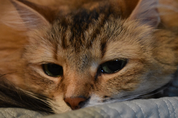 Why are Cat's Eyes So Watery – Top Kitten Eye Guide