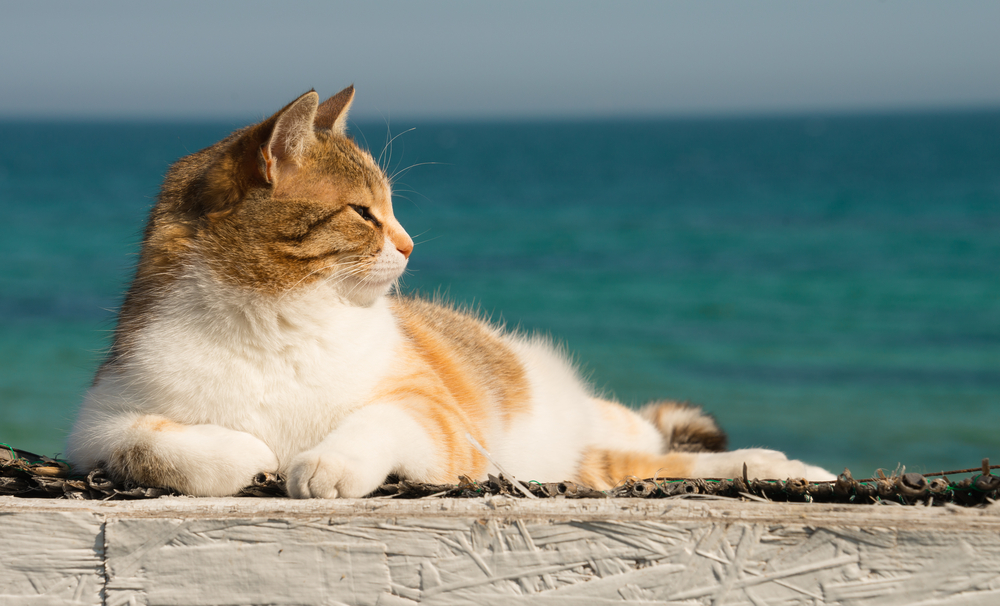 Great and good advice for cats in summer