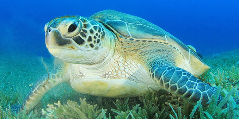 Curiosities of The Turtles That You Did Not Know And That You Will Like