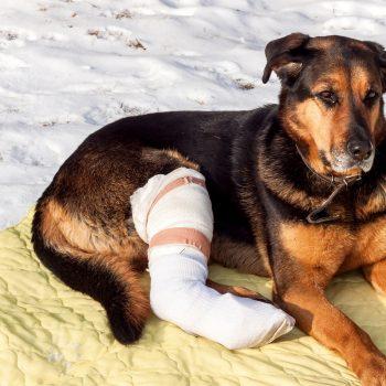 pet injury