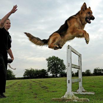pets training