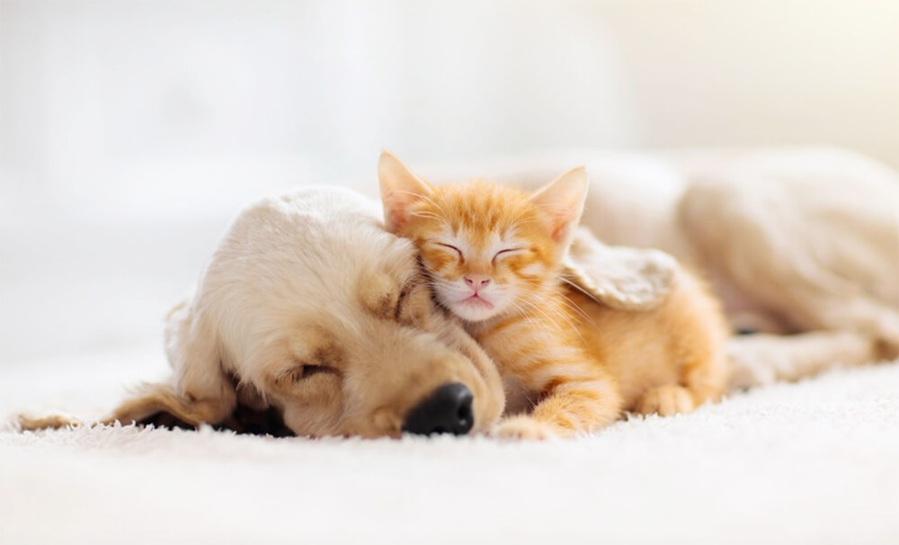 What are the Top 3 Most Common Pets?