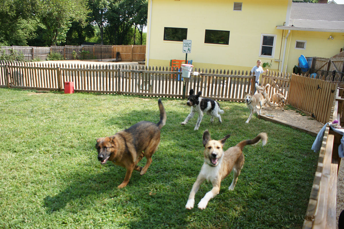 Benefits of a Daycare For Dogs in Melbourne