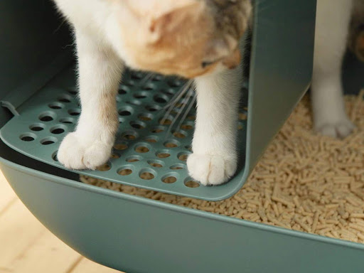 Cat Litter: Advantages And Disadvantages of Each Type