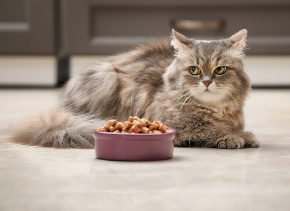Types and brands of natural food for dogs and cats